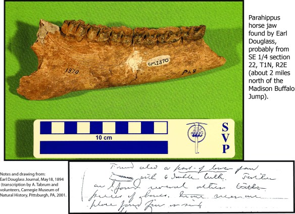 horse jaw from douglass madbluff