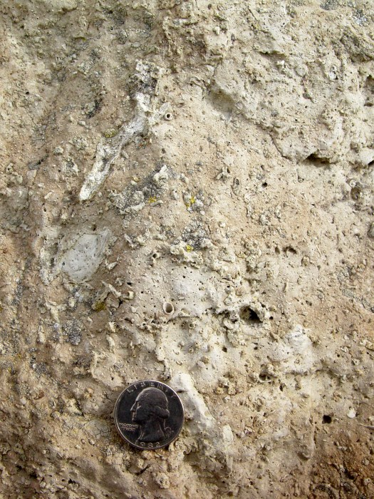 Roots within the calcic paleosols found at the Madison Bluffs.