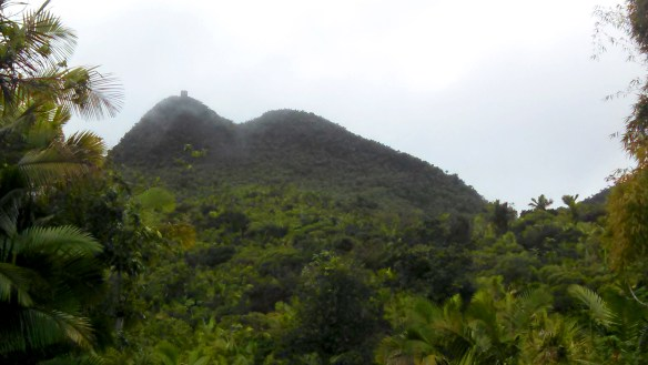 Mt. Britton Tower within the cloud forest of El Yunque.