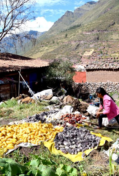 Farming methods in the Sacred Valley are still non-mechanized.