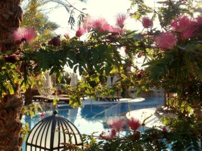 Blick auf den Pool in der Nähe der Zimmer