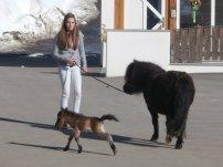 Das Pony-Fohlen beim Klammerwirt war gerade 5 Tage alt