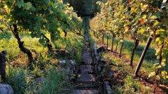 Die Stäffele (Treppen) in den Weingärten in Wangen