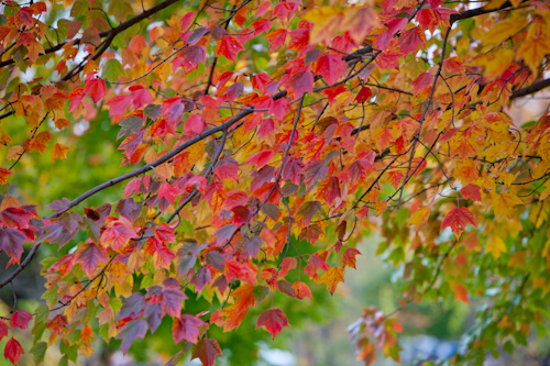 fall color 5