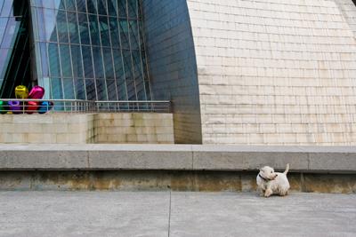 Westie in front of Guggenheim