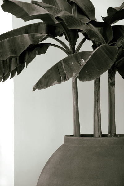 banana grayscale