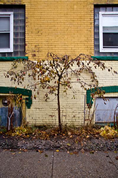 yellow bldg with tree