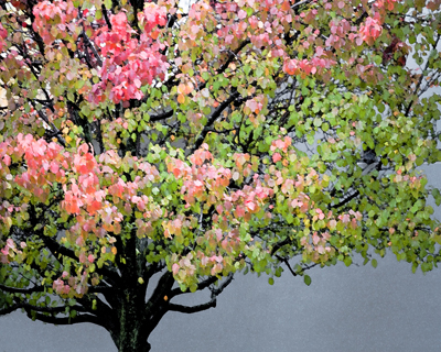 maple tree (altered)