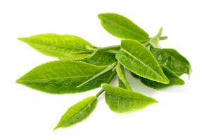 health-benefits-of-green-tea-3