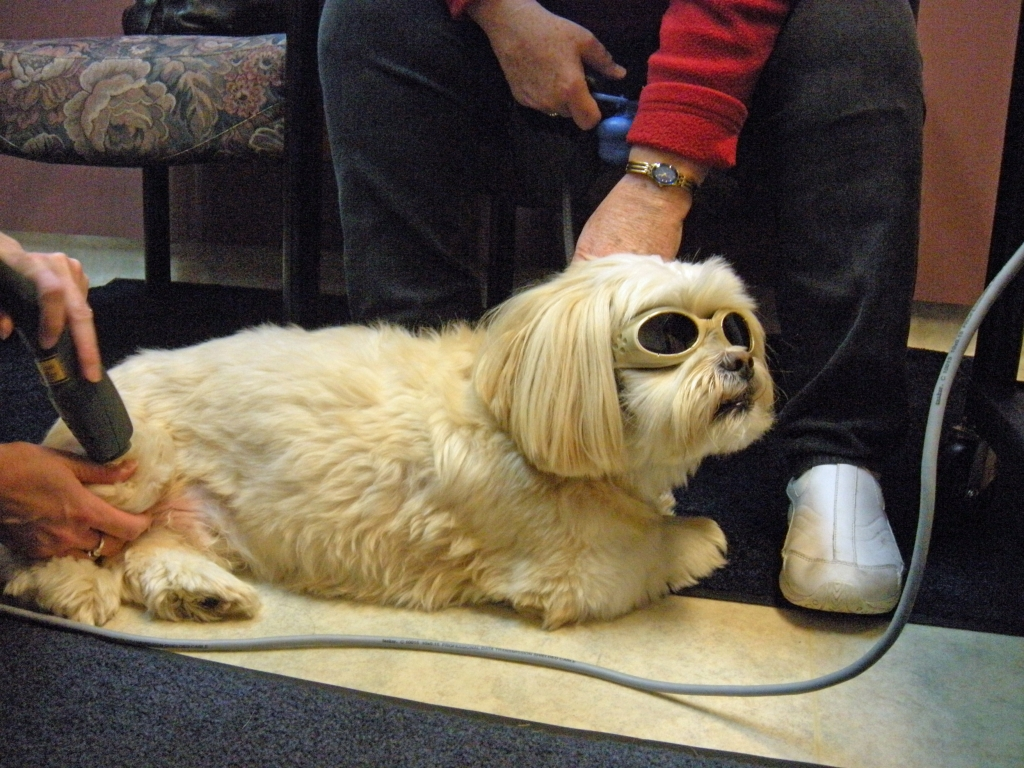 MLS Therapy Laser Georgetown Animal Clinic PC