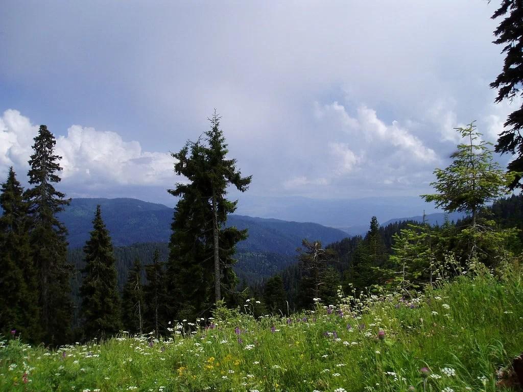 Borjomi-Kharagauli national park
