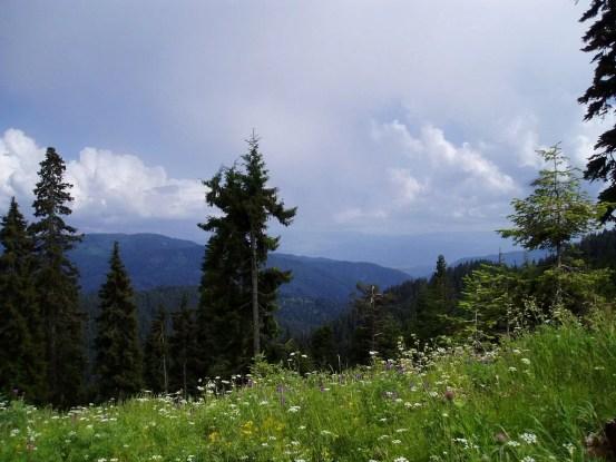 Borjomi_Kharaguli_National_Park_-_Georgia