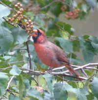 Georgia Backyard Nature: Plants for Birds and Wildlife