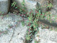 Georgia Backyard Nature: Weeds and Pesky Plants