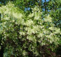 Georgia Backyard Nature: Trees and Shrubs