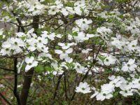 Georgia Backyard Nature: Native Plants