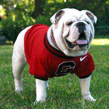 Image result for uga dog
