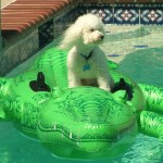 Joey the Poodle, Security Officer