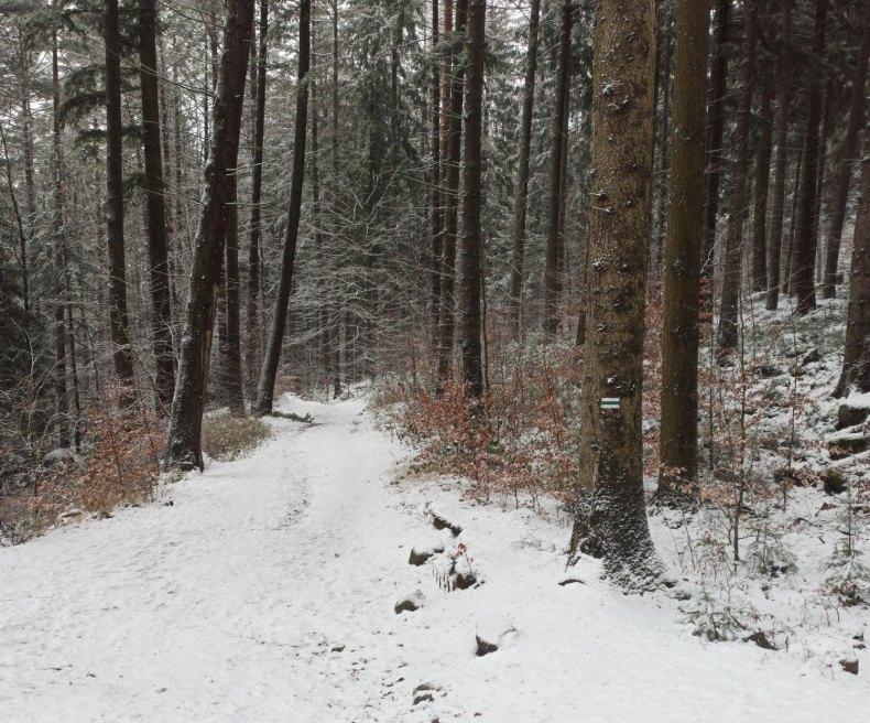 Podejście pod Zamek Bolczów zielonym szlakiem.