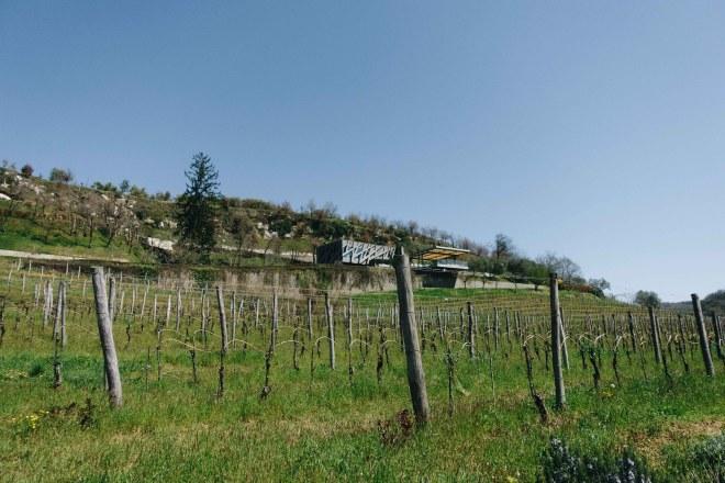 Buje, Groznjan, Livade, Rennradroute, Istrien, Porec, Istriabike, Kroatien