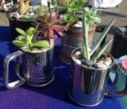 July 408 succulents