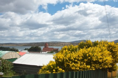 Summer in the Falklands