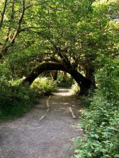 Hoh Rainforest_0096