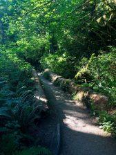 Hoh Rainforest_0098