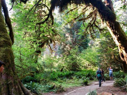Hoh Rainforest_1242