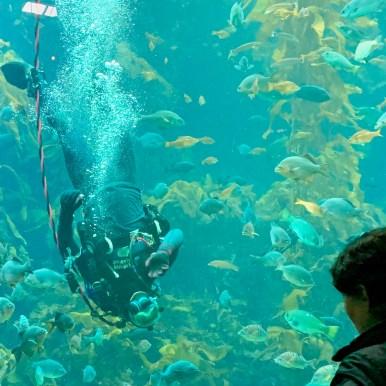 Monterey Aquarium_0230