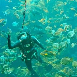 Monterey Aquarium_0232