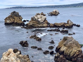 Point Lobos_0514