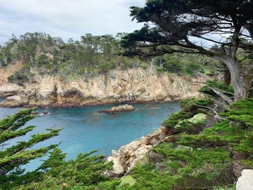 Point Lobos_0520