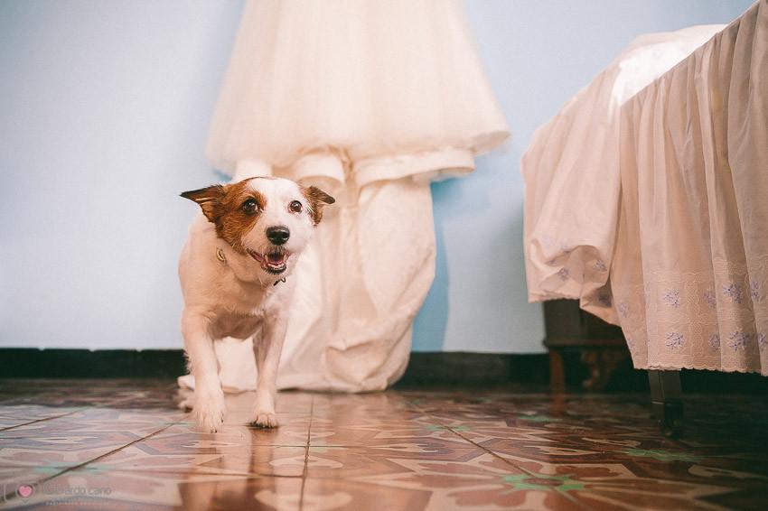 Fotos bodas en el campo - fotógrafos Castellon (39)