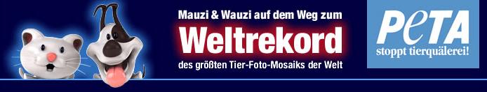 Screenshoot Webseite
