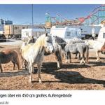 Tierrechtler greifen Ponyreitbahn in Hamburg an – Zwei Kinder verletzt
