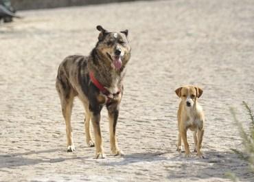 Tausende von Streunerhunde bevölkern die Straßen von Städte in Rumänien