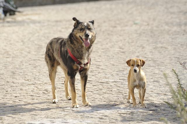 PeTA will Rumänien das töten von Streunerhunden verbieten. Gleichzeitig tötet PeTA 90% der Tiere, die bei ihnen abgegeben werden