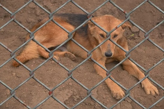 Tierheime verweigern Adoption