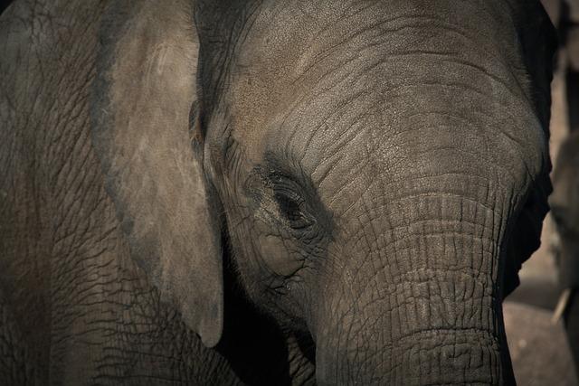 Elefanten Tierqualvideo von PeTA entpuppt sich als Lüge