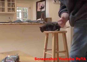 PeTA Skandal - Künstliche Katze gequält / Screenshot YouTube PeTA