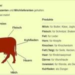 Fleisch essen ist gesellschaftsfeindlich