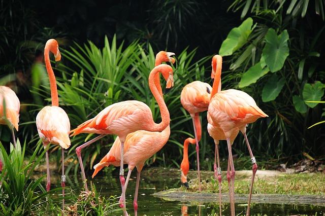 PeTA stellt Strafanzeige gegen fast alle Zoos