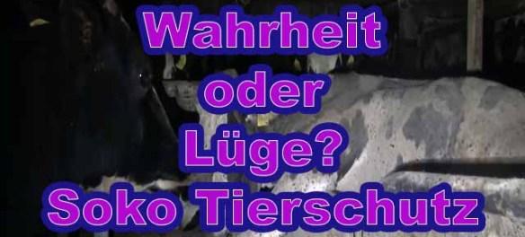 Friedrich Mülln von Soko Tierschutz lernt es nie / Screenshot YouTube