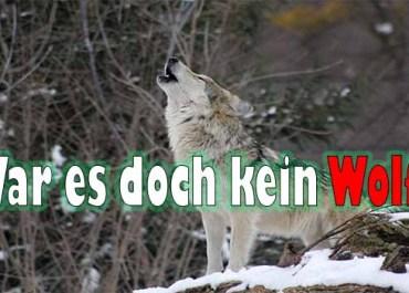 War es doch kein Wolf?