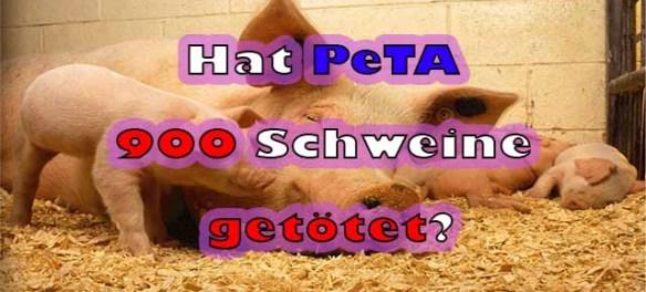 Hat PeTA 900 Schweine getötet?