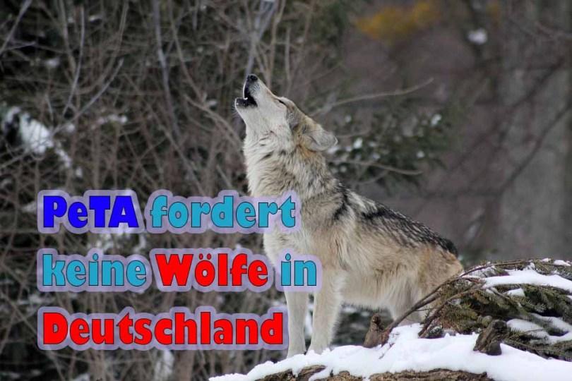 PeTA fordert ein Ende des Wolfes in Deutschland!