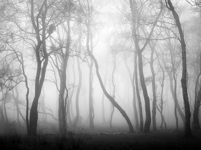 Trees in the fog #2