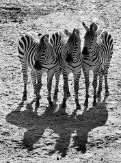 Stripes and Shadows