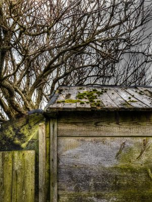 Shed in Burnopfield